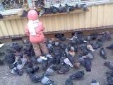 Дикие голуби!=)
